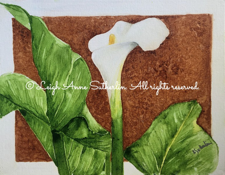 First Calla Lily