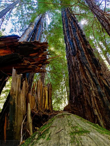 Big Trees Scene