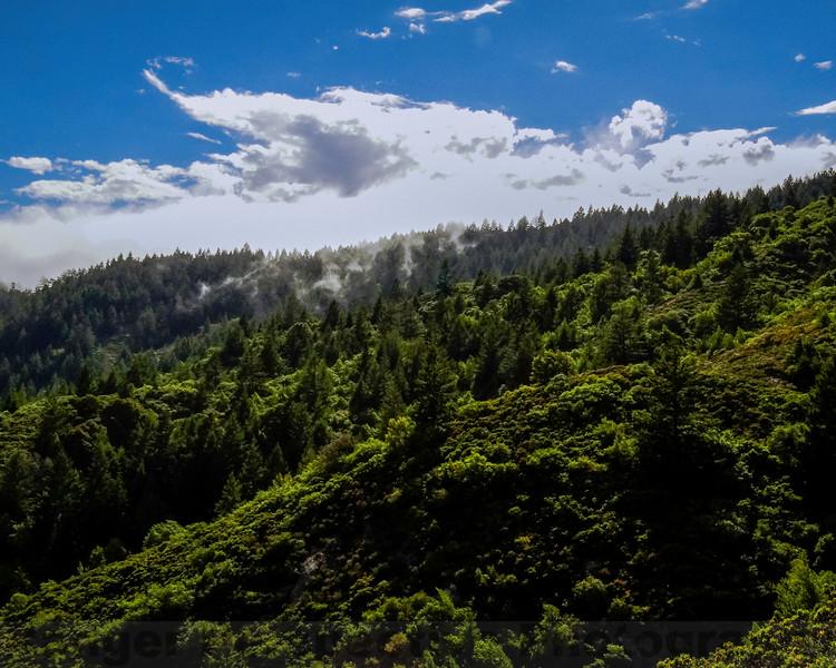Fog over the Ridge