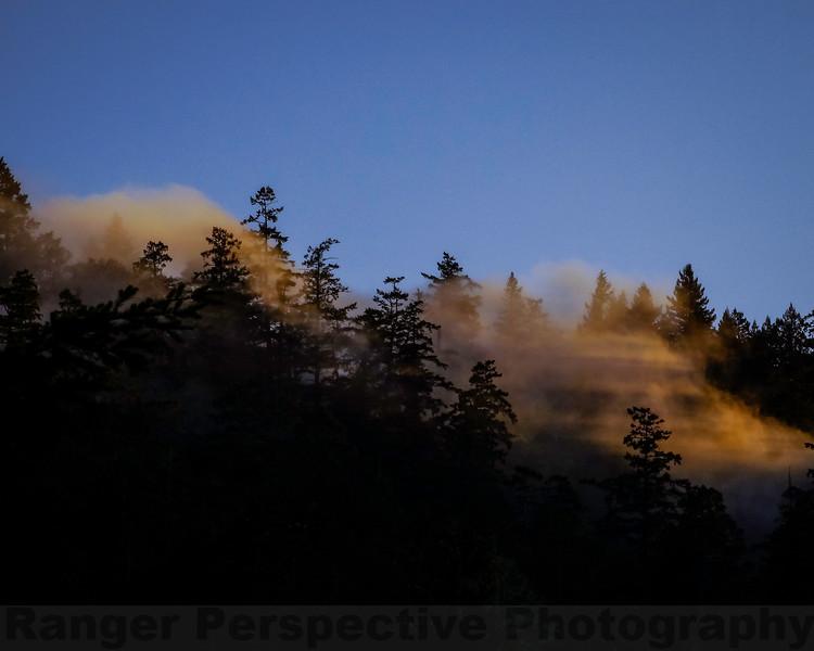 Evening Light and Fog on Bolinas Ridge