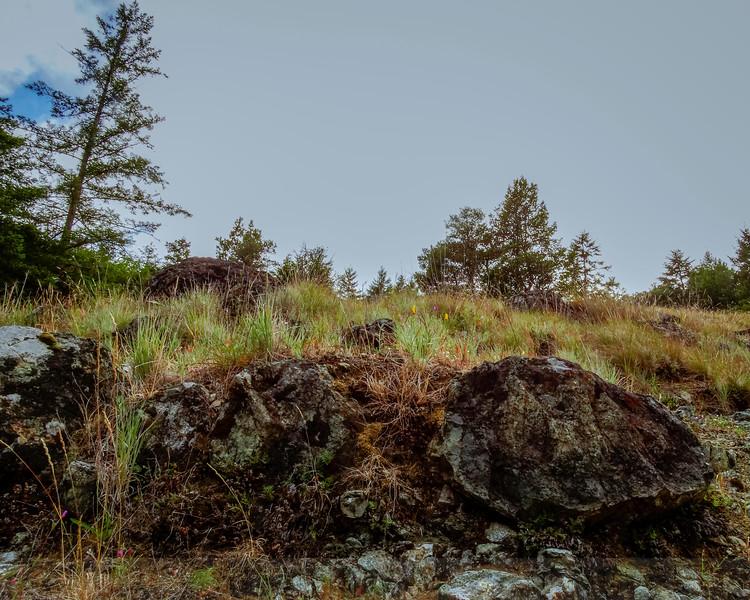 Serpentine Grassland along Alpine Lake