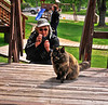Dylan trying to take a photo of this Cat at Talkeetna 6-9-11