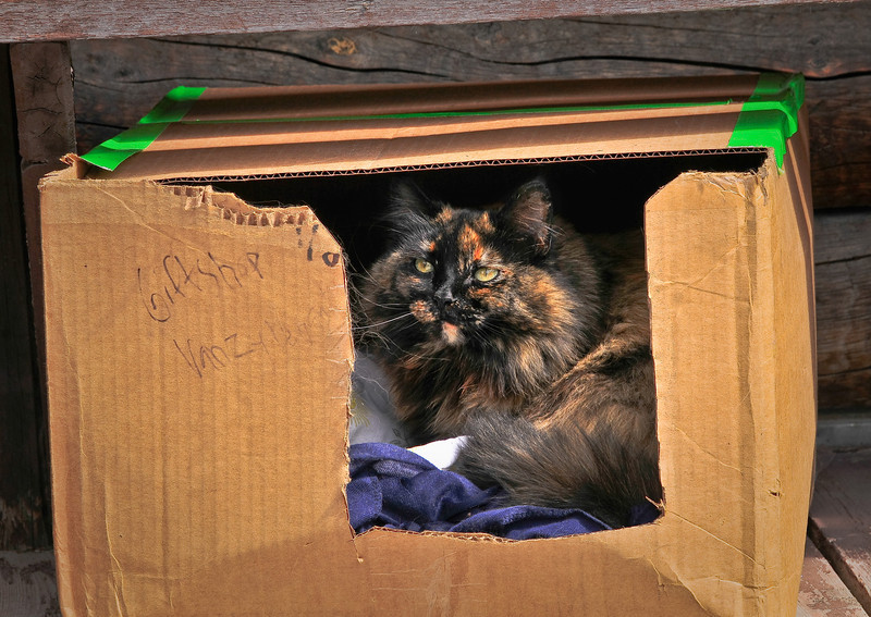 Cat near the K2aviation in the town of Talkeetna,AZ