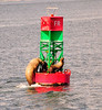 Misty Fjords -Fun watching the Stellar sea-lion struggle up the buoy-6-15-11