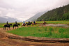 On our way to see the sled dog team-people who chose horse back riding excursion 6-14-11