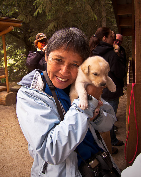 Musher Camp & Sled dog Experience 6-14-11-after Sled right got to hold the Alaskan puppy.