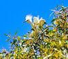 7-18-11 Snow Egret