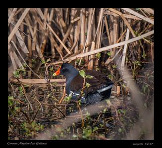 Birding with Grace-Las Gallinas