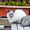 9-8-11 Cat in backyard