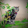 5-14-11-neighborhood cat