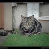 Cat belongs to Robbie & Olivia 5-14-11
