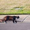 Neighborhood Cat 8-27-10