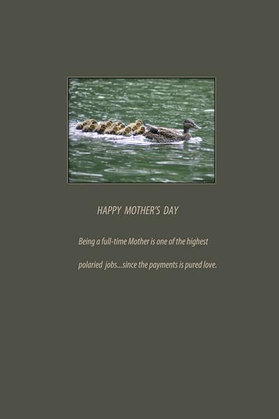 Mallard mother by Grace Ruth 4-17-11