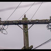 First time a Northern Flicker on a telephone pole in Daly City-view back yard.