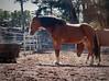 GGPark Horses 10-17-09