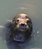 Seal Pacifica 5-6-12