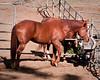Horse at Police Academy GGPark 10-17-10