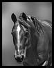 Horse at GGpark 10-17-09