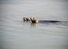 Sea Lion 10-18-08