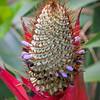 Bromeliad  3-19-09