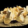 Puttle's skull -2007
