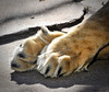 Female Lion Paws 1-10-11