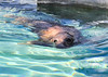 Orkney -Gray Seal 1-10-11