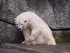 Polar Bear 10-20-10