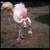 Chick 4 days born 10-8-16