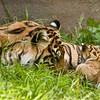 Mom and cub 4-24-08