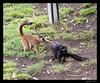 Red-Fronted & Black Lemur