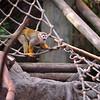 Squirrel Monkey 1-5-12