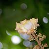 Very unusual flower