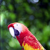 One of the many Macaws in the jungle