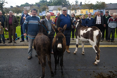 "The competitors in the ""My Lovely donkey"" competition..."