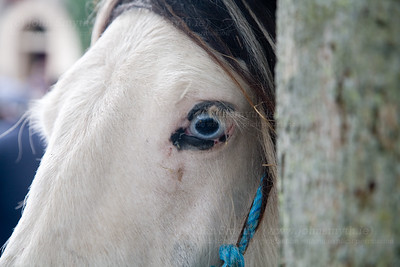 Zombie pony.  This pony had no problem standing still and posing...until I lifted my camera to take the shot.