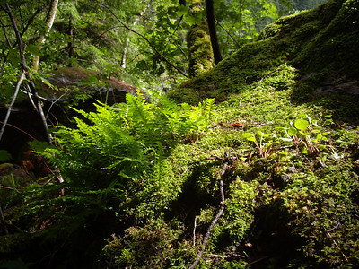 Newhalem is very lush.