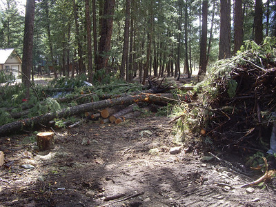 Lots of new trees and crap to clean up after the septic install.
