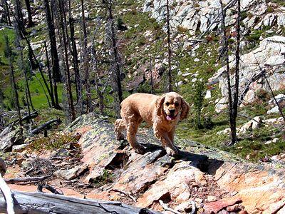 029w more rock hound