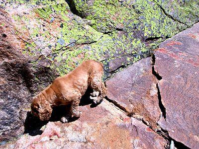 023w rock houndr
