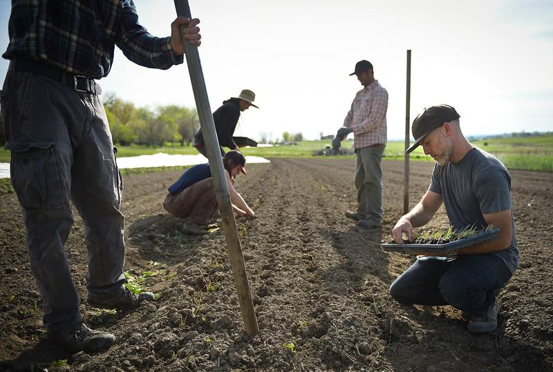 MCCAULEY FAMILY FARM