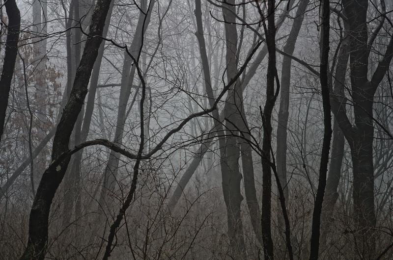 The fog settles in, Western Pennsylvania