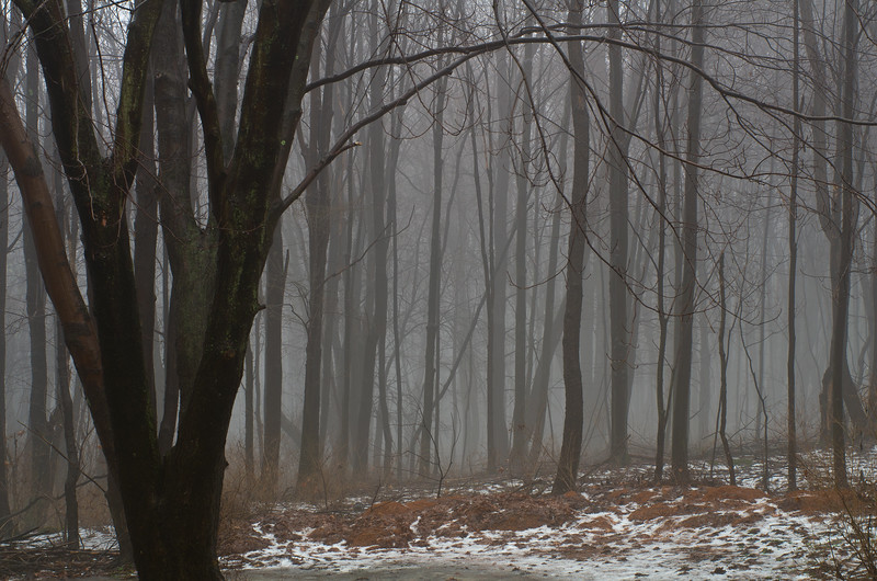 I grew up in these woods, Western Pennsylvania