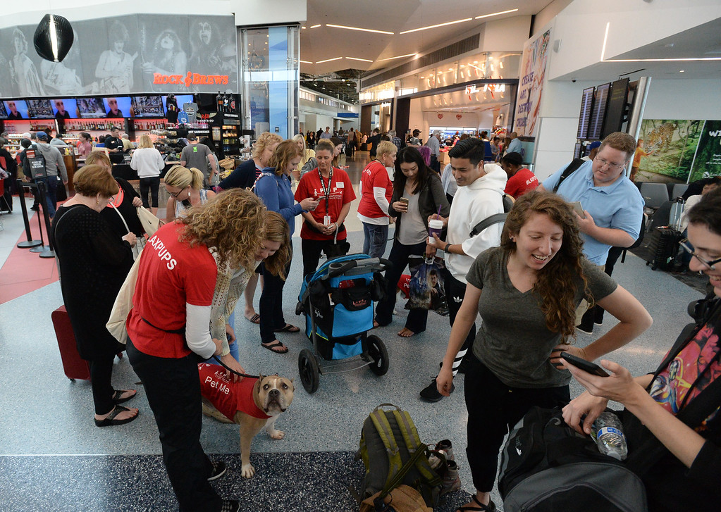 . Pets Unstressing Passengers travelled through terminals at LAX to help relieve travelers\' stress Sunday, May 14, 2017, Los Angeles. (Photo by Steve McCrank, Daily Breeze/SCNG)