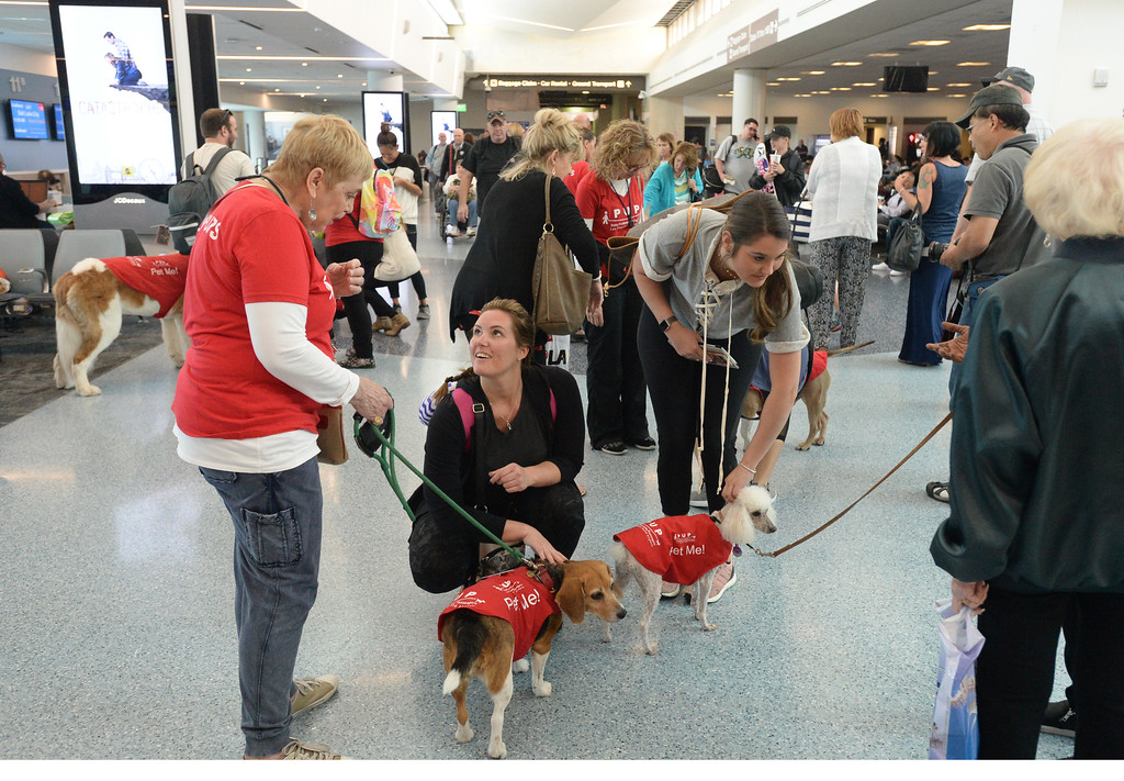 . Pets Unstressing Passengers travelled through terminals at LAX to help relieve travelers\' stress Sunday, May 14, 2017, Los Angeles.  Molly and Little Bit draw people on the way to their gates in Terminal 1. (Photo by Steve McCrank, Daily Breeze/SCNG)