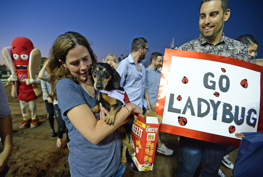 . Lady Bug, from Redondo Beach, has an entourage in the 22nd Wienerschnitzel Wiener Nationals at Los Alamitos Race Course Saturday, July 22, 2017, Los Alamitos, CA. Lady Bug was abandoned due to a physical challenge that left her unable to walk. However, her owner Deanna O\'Neil, center,  rehabilitated her and now she is even able to race. (Photo by Steve McCrank, Daily Breeze/SCNG)