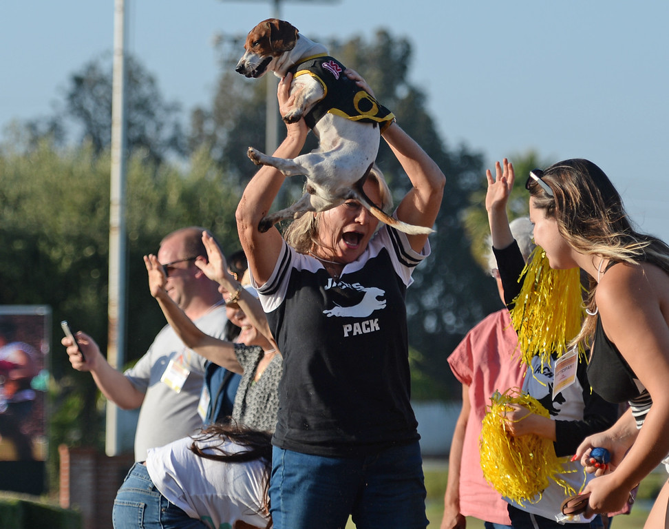 . Jack is hoisted in celebration after winning a qualifying heat in the 22nd Wienerschnitzel Wiener Nationals at Los Alamitos Race Course Saturday, July 22, 2017, Los Alamitos, CA.  (Photo by Steve McCrank, Daily Breeze/SCNG)