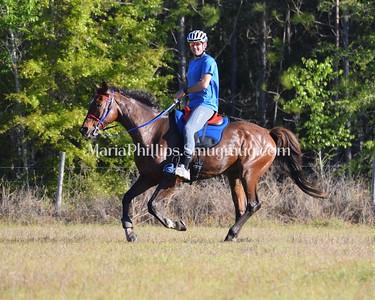 McCulley Farms Endurance 2017