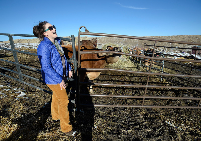 Maureen McDonough laughs as one of her cows makes a loud noise trying to get her calfs attention Tuesday, Jan. 17, 2017, at the farm where she lives west of Berthoud.  (Photo by Jenny Sparks/Loveland Reporter-Herald)
