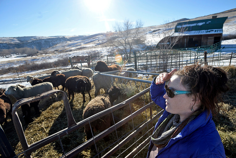 Maureen McDonough looks over her sheep Tuesday, Jan. 17, 2017, on the farm where she lives now west of Berthoud. She moved from a smaller farm when it became questionable whether or not Larimer County code allowed her to farm there. (Photo by Jenny Sparks/Loveland Reporter-Herald)